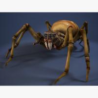 Spider-foulbrood