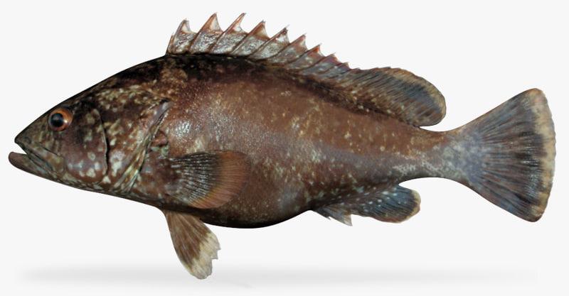 clipperton grouper ma
