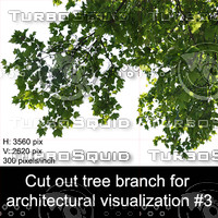 Cut out tree branch for  architectural visualization #3