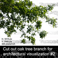 Cut out oak tree branch for  architectural visualization #2