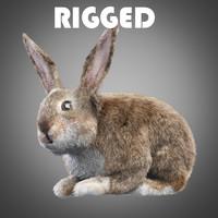 Rabbit - bunny