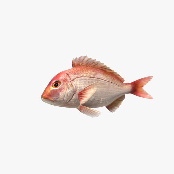 snapper fish animation 3d model