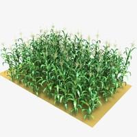 Corn Field Mid-Lowpoly