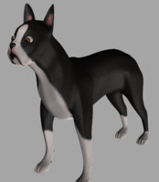 boston terrier obj