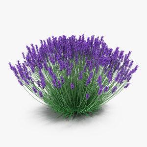 lavender bush 3d model