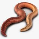 earthworm 3D models