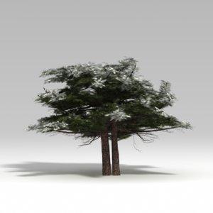 snowtree tree snow ma