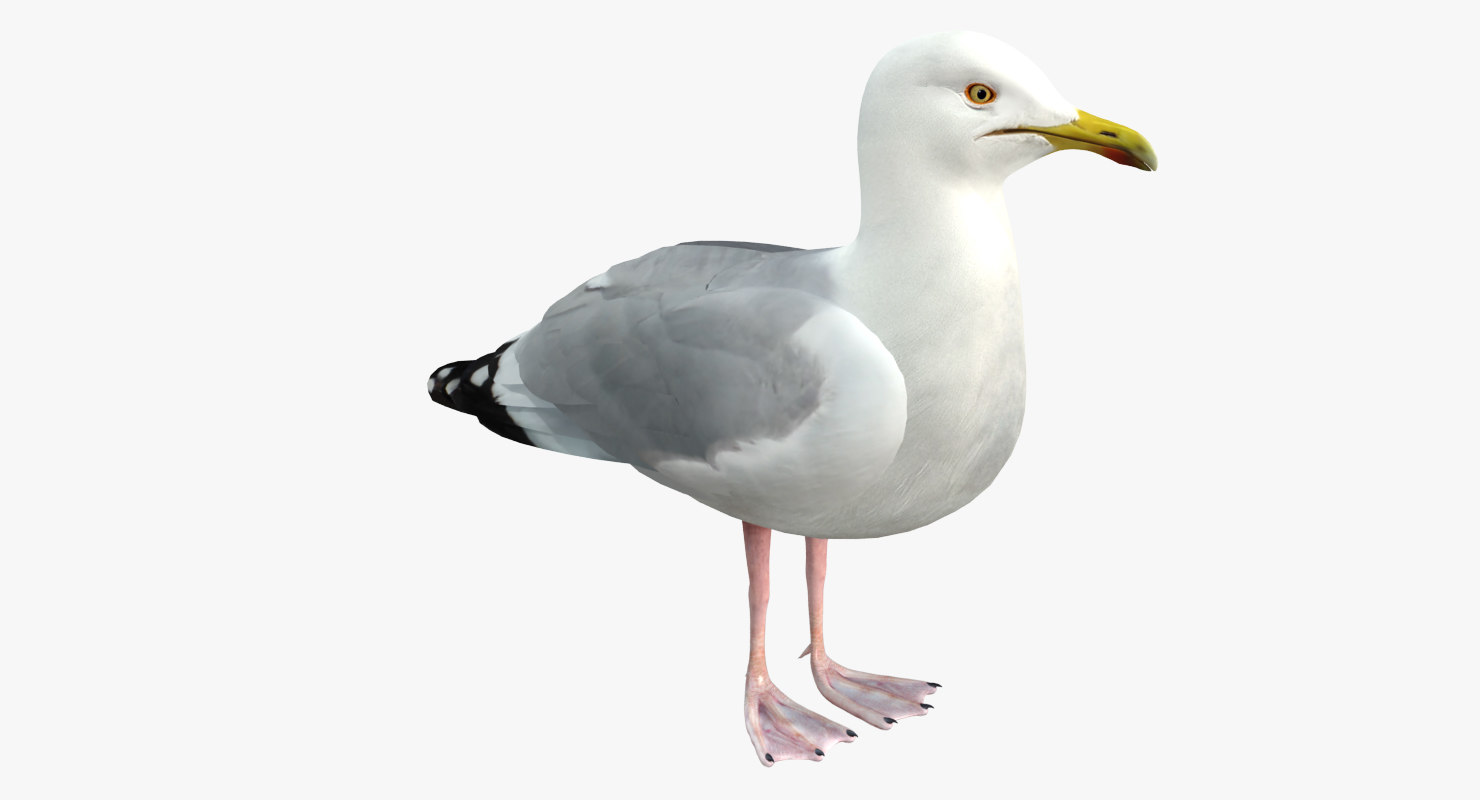 3d model seagull rigged