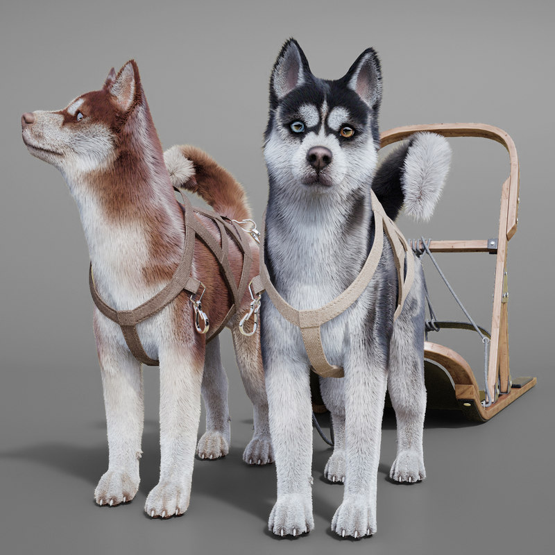 3d husky fur hair model