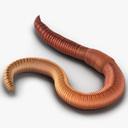worm 3D models
