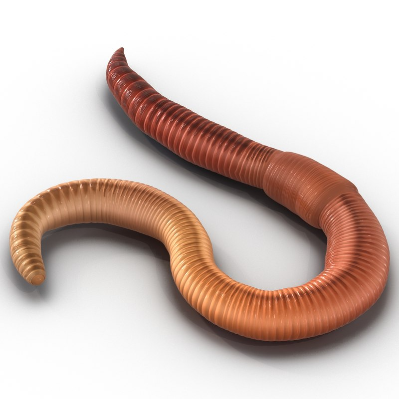 earth worm rigged 3d max
