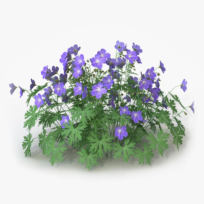 perennial geranium landscape flowers 3d c4d