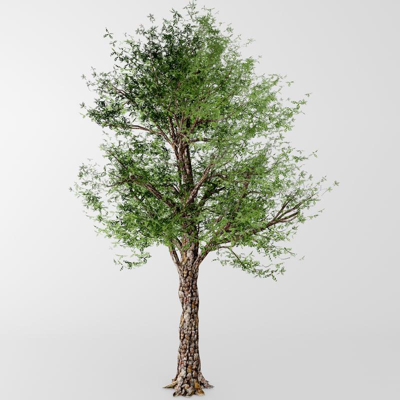 deciduous tree obj