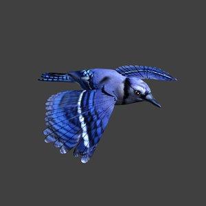 3d blue jay model