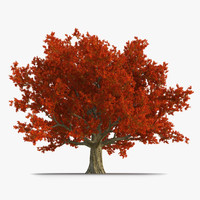 3d red oak old tree model