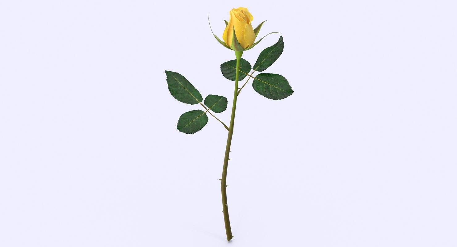 3d max rose modeled