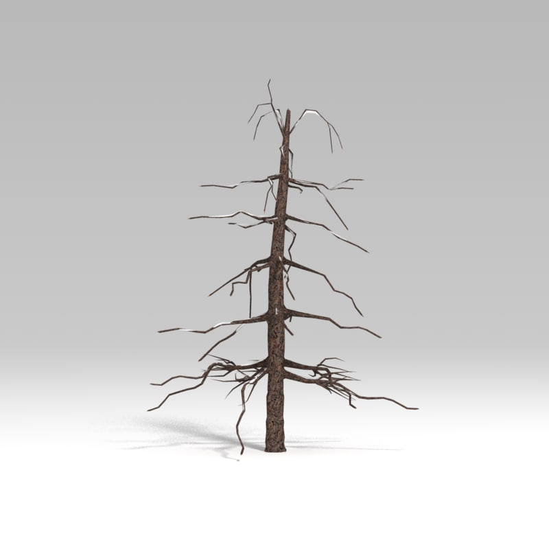 3d model snowtree tree snow