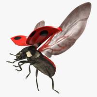 coccinella septempunctata seven-spotted ladybug 3d model