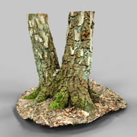 environment asset photoscanned 3d model