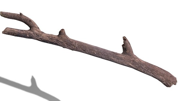 3d branch rotten wood model
