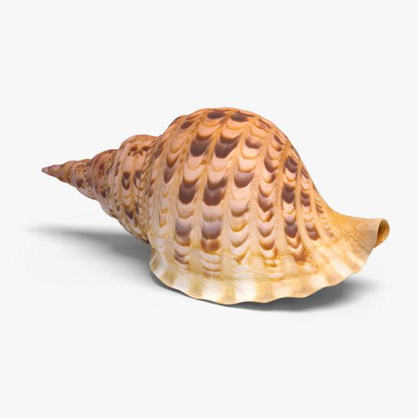 realistic conch 3d model