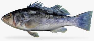 3d fbx kelp bass