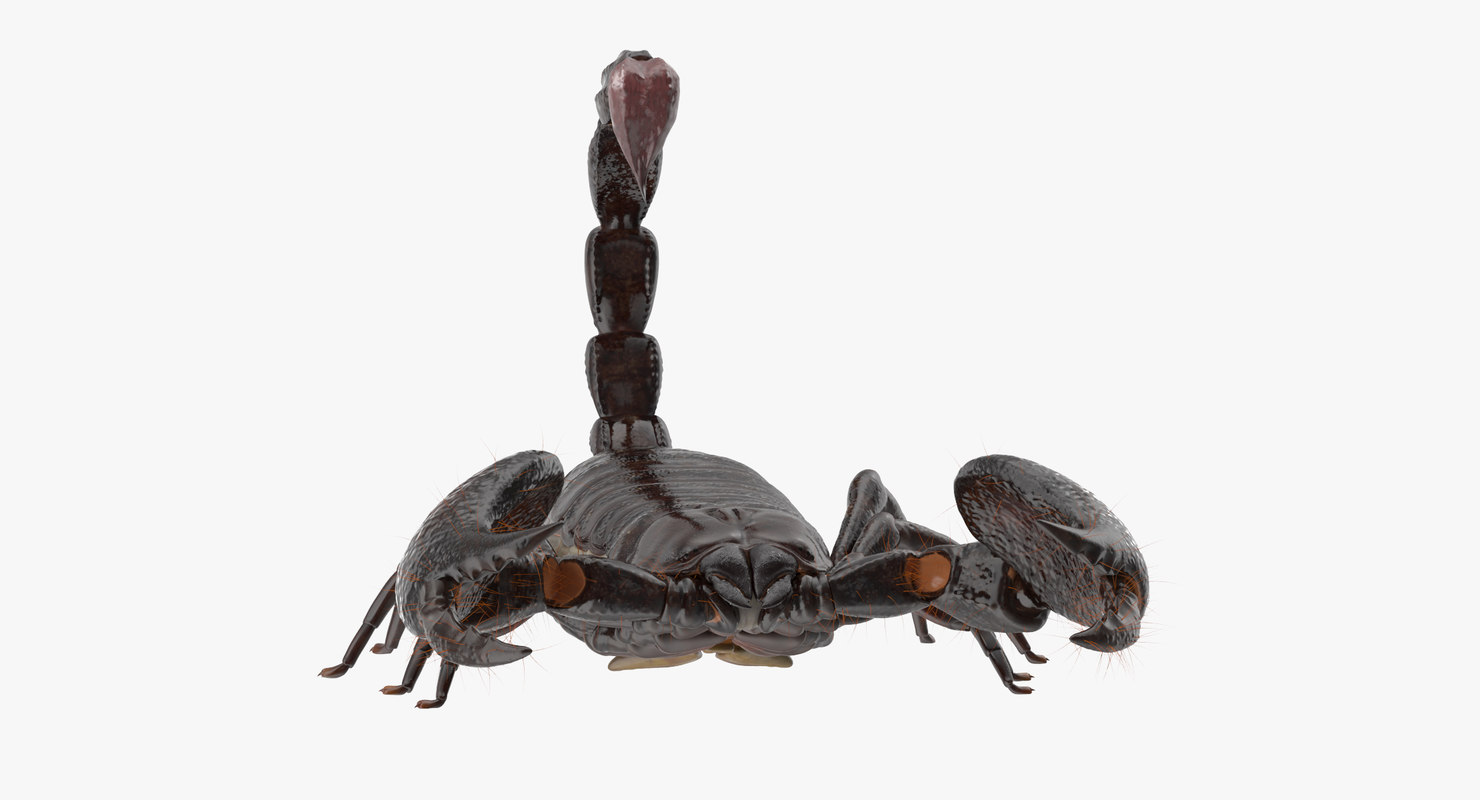 3d scorpion - model