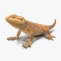 obj bearded dragon pose 2