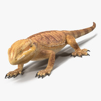 3d model bearded dragon pose 3