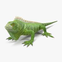 c4d green iguana