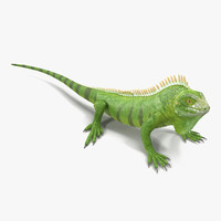 3d model green iguana pose 2