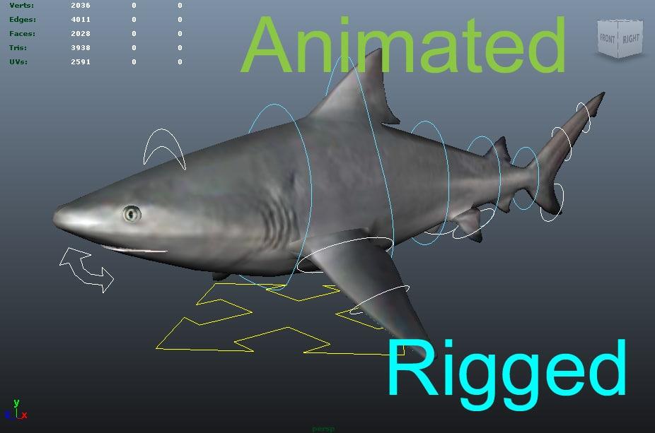 3d bull shark