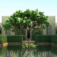 10 Frangipani