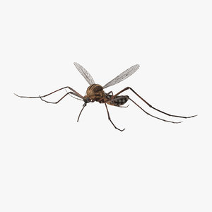 flying mosquito 3d model