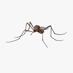 mosquito standing max