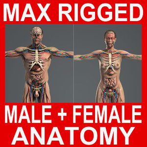 rigged complete male female 3d max