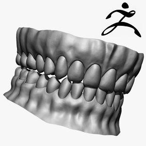 3d teeth base mesh zbrush