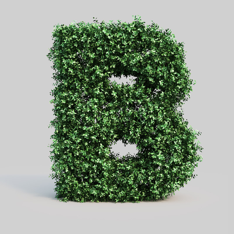 alphabet b buxus max