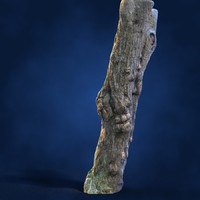 tree chestnut trunk 3d model