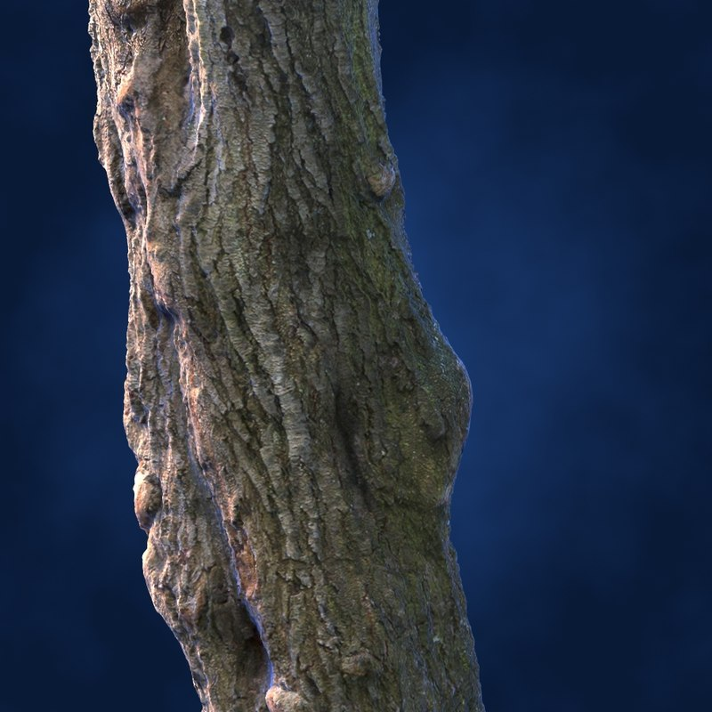 tree chestnut trunk 3d model
