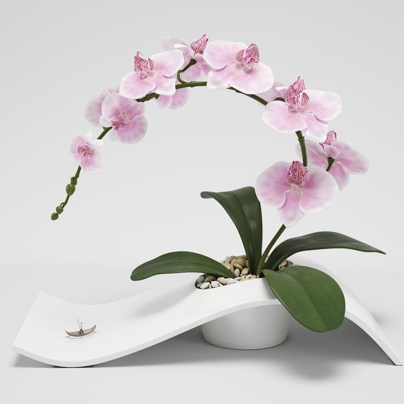 orchid arrangement max