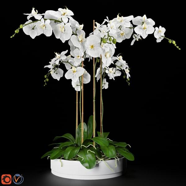 orchid arrangement 3d max