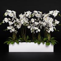 orchid 3 3d model