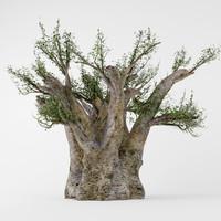 3d baobab model