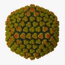 Adenovirus 3D models