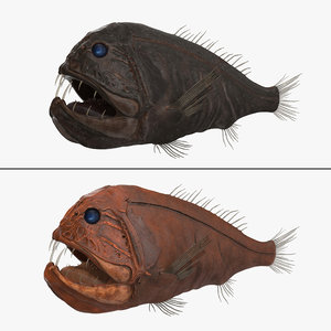 3d model of fangtooth fish