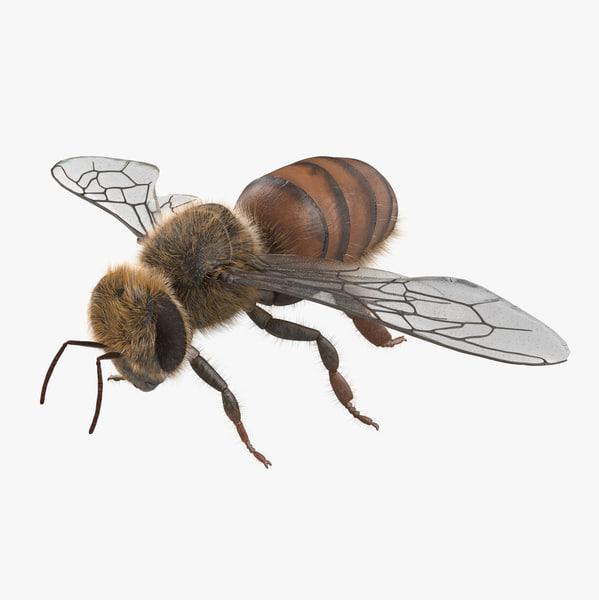 max honey bee