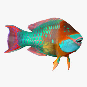 rainbow parrot fish rigged 3d max