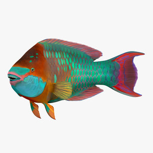 rainbow parrot fish pose 3d model