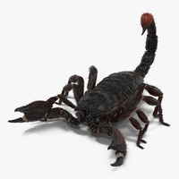 Black Scorpion Rigged with Fur 3D Model
